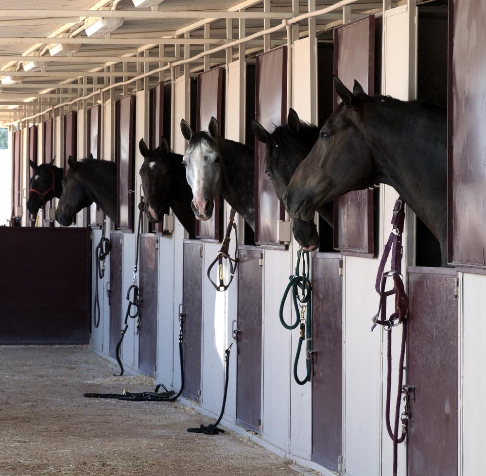 Eclairage batiment elevage les bienfaits d 39 une lumi re - Course de chevaux table de multiplication ...