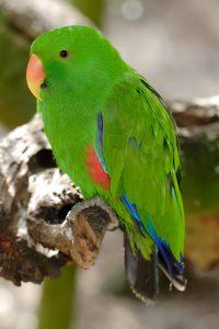 perroquet éclairage pour oiseaux